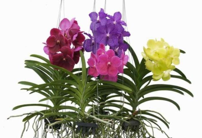 albert plants fioraio martinsicuro piante verdi piante fiorite composizioni. Black Bedroom Furniture Sets. Home Design Ideas