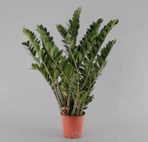 Albert plants fioraio martinsicuro piante verdi piante - Piante verdi interno ...